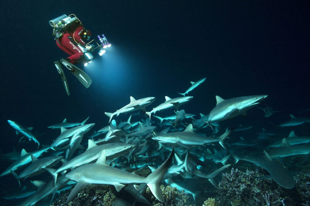700 Requins documentaire